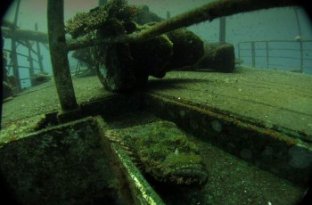 Stone fish na horní palubě foto:MTesar
